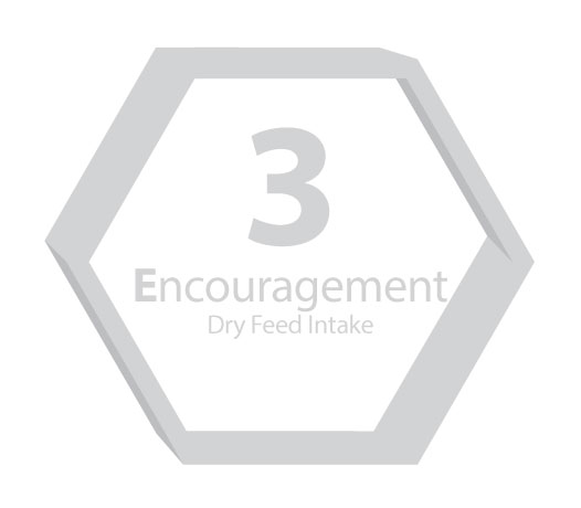 3E Step 3 Encourage