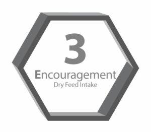 Encouragement 3E step 3