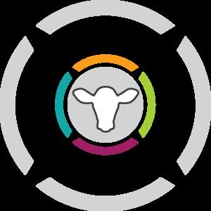 Calf Protocol master program icon